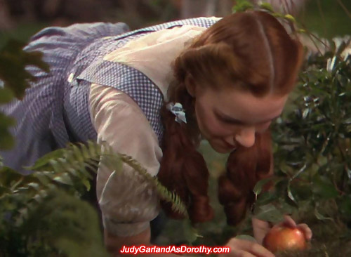 A hungry Judy Garland as Dorothy collects an apple in the forest